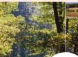Les bois et forêts